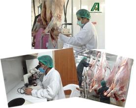 Meat-Hygiene-Inspection